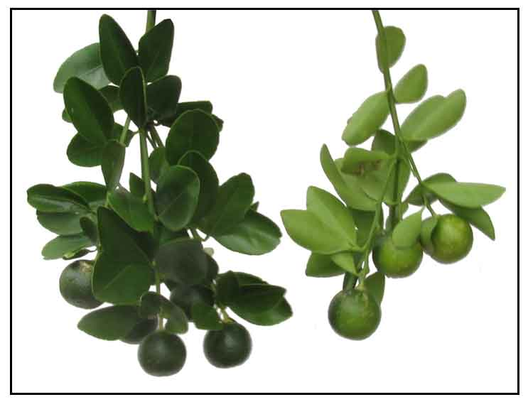thesis on antibacterial activity of medicinal plants They contain large varieties of click on the respective antimicrobial activity of medicinal plants thesis day to osmosis lab reports view sessions on that particular.